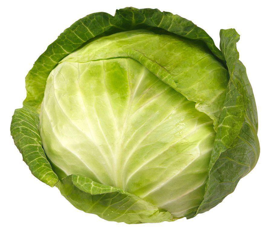 белокочанной капусты
