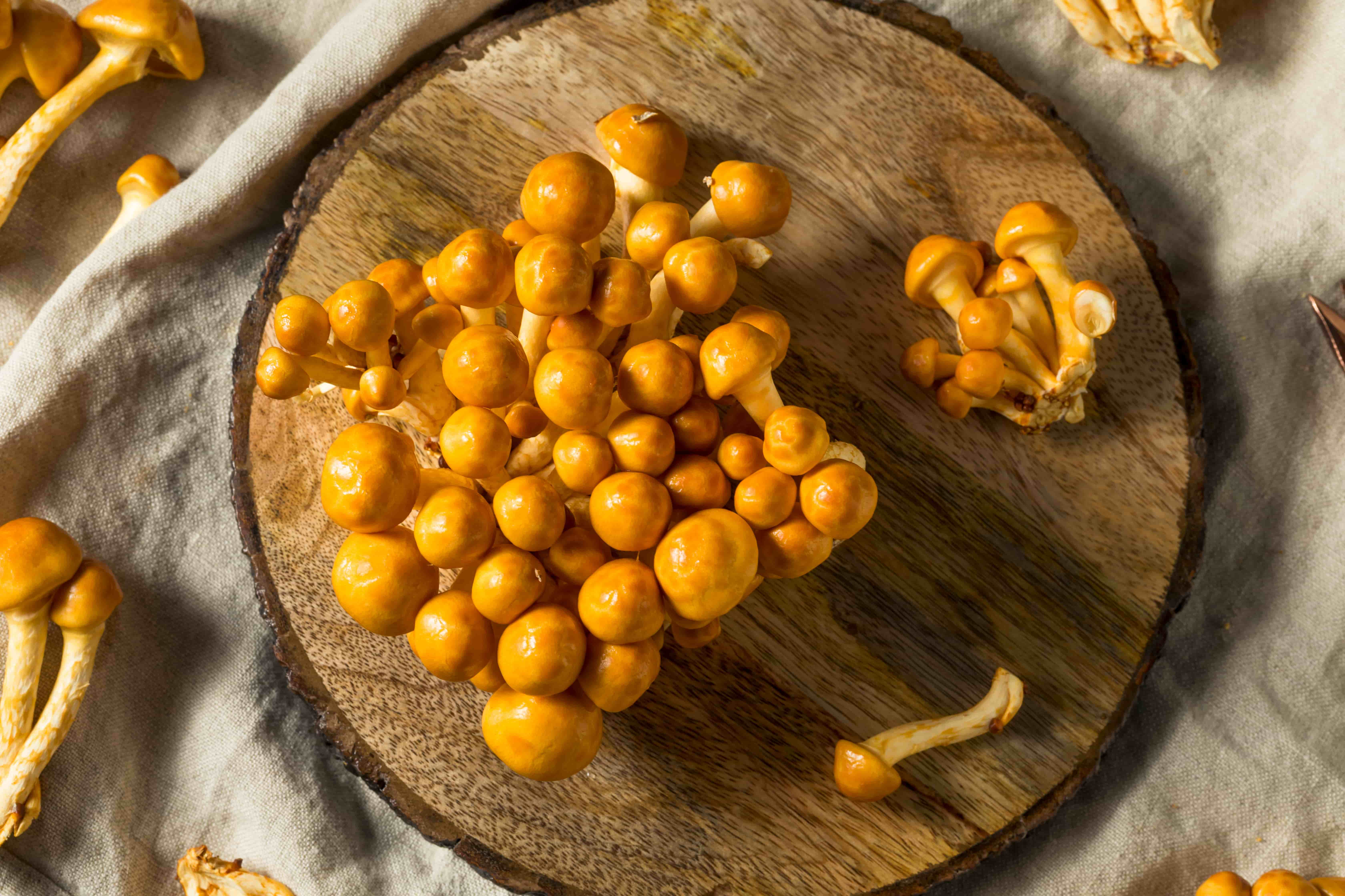 грибы намеко