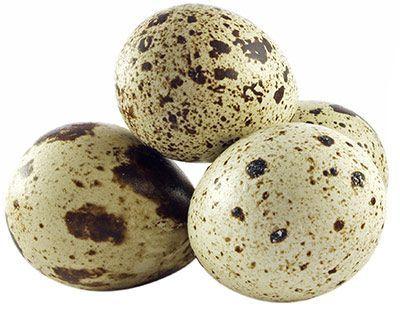 Перепелиные яйца 20шт Мокшанские