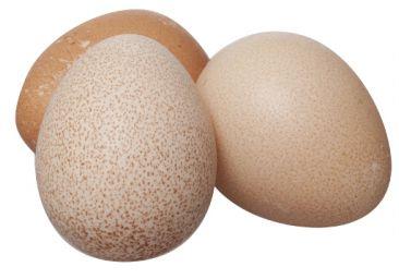 Яйца цесарки 10шт Экопремиум