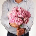 Пион розовый Сара Бернар ~50см 1шт