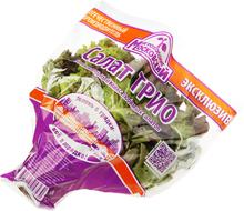 Салат латук Трио в горшочке 1шт