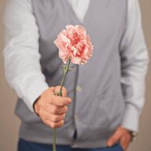 Гвоздика розовая 50см 1шт