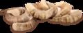 Креветки тигровые средние 1кг