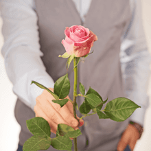 Роза розовая Вэм 40см 1шт