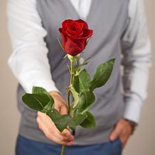 Роза красная Фридом 1шт