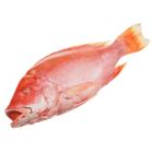 Снеппер красный свежемороженный ~2,5кг