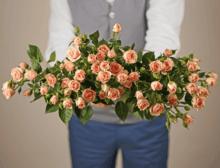 Роза кустовая Лидия 1шт