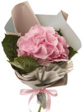 Букет №28 Гортензия розовая