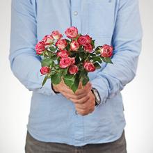 Роза кустовая Сафина ~40см 1шт