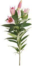 Лилия розовая 1шт