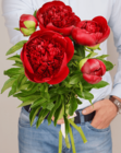 Пион красный Ред Шарм ~50см 1шт
