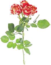 Роза кустовая Парисьен ~40см 1шт