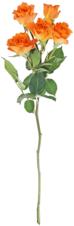Роза кустовая Гуд Пич ~50см 1шт