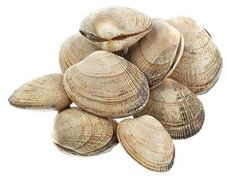 Вонголе живые морской петушок 1 кг