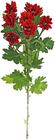 Хризантема кустовая красная Бонтемпи 1шт