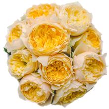 Розы Голден Вувузела в шляпной коробке L ~9шт