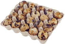 Яйца перепелиные пищевые 20шт