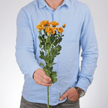 Хризантема кустовая Гранд Оранж ~65см 1шт