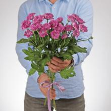Хризантема кустовая пурпурная Анкетил Дак 1шт