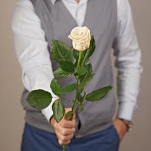 Роза Талея 60см 1шт