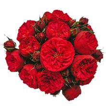 Розы красные Пиано в шляпной коробке L ~15шт