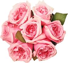 Роза Дэвида Остина Миранда в шляпной коробке  L ~7шт