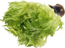 Салат латук Фриллис в горшочке 1шт