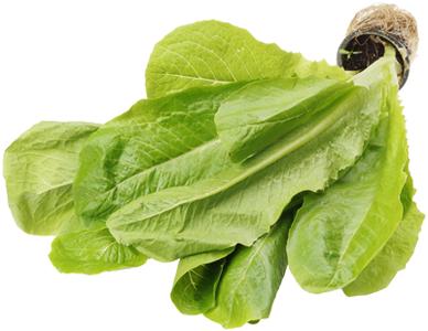 Салат латук Ромэн в горшочке 1шт