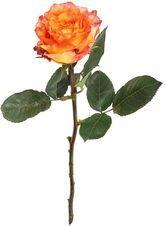Роза Спирит 1шт