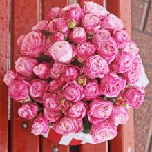 Розы Леди Бомбастик в шляпной коробке прованс XL ~9шт