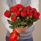 Роза красная Пиано ~50см 1шт