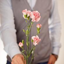 Гвоздика кустовая розовая ~40см 1шт