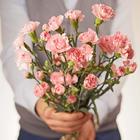 Гвоздика кустовая розовая 60см 1шт