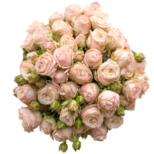 Розы Бомбастик в шляпной коробке L ~9шт