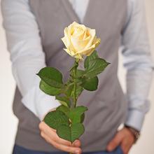 Роза персиковая Аваланж Пич 60см 1шт