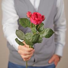 Роза Пинк Пиано ~50см 1шт