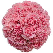 Гвоздики розовые в шляпной коробке XL ~35шт