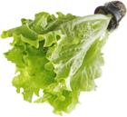 Салат в горшочке ~140г