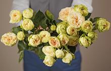 Роза кустовая Бланшет 50см 1шт