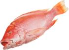 Снеппер красный свежемороженный ~3,5кг
