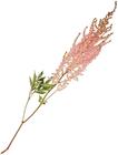 Астильба Эрика розовая ~60см 1шт