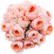 Розы Дэвида Остина Джульетта в шляпной коробке XL ~17шт