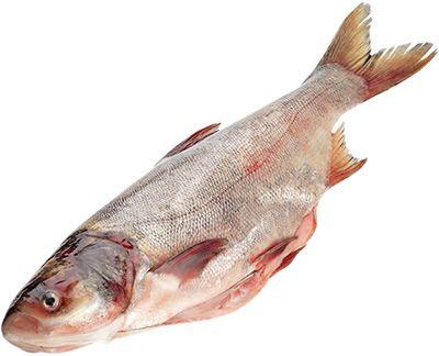 Толстолобик охлажденный ~2кг 1-2шт, с головой, потрошеный вес рыбы от 1,0 до 2 кг