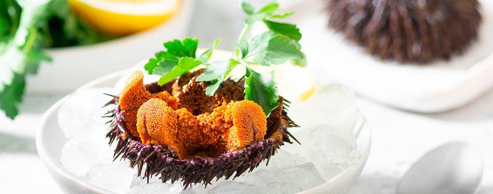 икра морских ежей в кулинарии